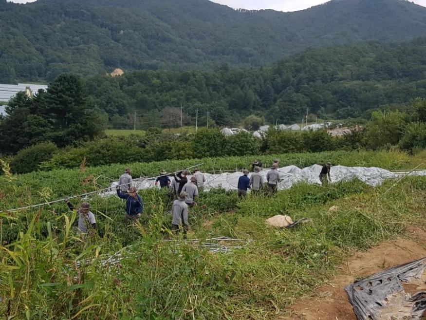 과훈단-하우스 잔해 철거작업 (1).jpg